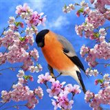 Bird Collection 28 Art Print