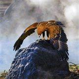 Bird Collection 29 Art Print