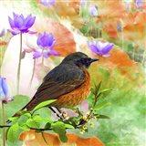 Bird Collection 30 Art Print