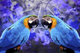Bird Collection 32 Art Print