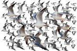 Bird Collection 35 Art Print