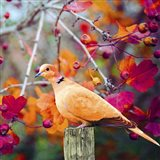 Bird Collection 37 Art Print