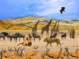 Lion African Safari 1A Art Print