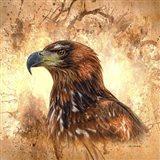 Eagle Portrait Art Print