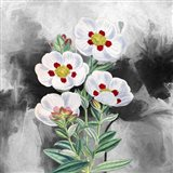 White Flowers 1 Art Print