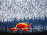 Red Fish 3 Art Print