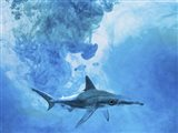 Sea Life 1 Art Print