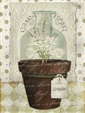 Herb Pot Lavender Art Print