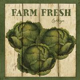 Farm Fresh Cabbage Art Print