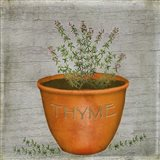 Herb Thyme Art Print