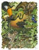 Endangered Rainforest Art Print