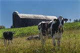 Dairy Farm Art Print