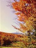 Vegas Autumn Art Print