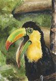Toucan Bill Art Print