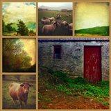 Livestock Art Print