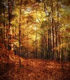Autumn's Enchanted Forest Art Print
