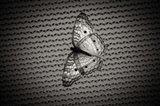 Butterfly Contrast Art Print