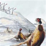 Ring Necked Pheasant Art Print