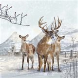 Stag And Females Art Print