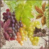 Vintage Fruits II Grapes Art Print