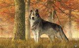 A Wolf In Autumn Art Print