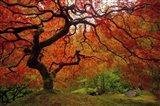 Tree Fire Art Print