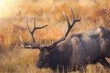 Shooting the Bull Art Print