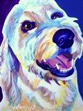Goldendoodle Penny Art Print