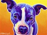 Pit Bull Sadie Art Print