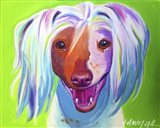 Chinese Crested - Grin Art Print