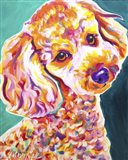 Poodle - Curly Art Print