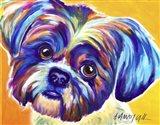 Shih Tzu - Lacey Art Print