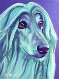 Afghan Hound - Aqua Art Print