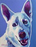 Husky - Joaquin Art Print