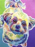 Maltipoo - Ziggy Art Print