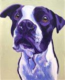 Pit Bull - David Art Print
