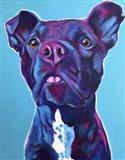 Pit Bull - Neko Art Print