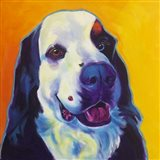 Bernese Mountain Dog - Zeke 2 Art Print
