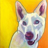 Husky - Charlie Art Print