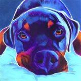 Rottie - Dexter 2 Art Print