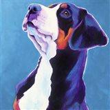 Swissie - Puppy Art Print