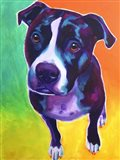 Pit Bull - Truman Art Print