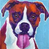 Boxer - Lucy Art Print