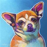 Chihuahua - Starr Art Print