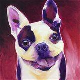 Boston Terrier - Abigail Art Print