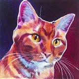 Cat - Linus Art Print