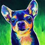 Chihuahua - Jack Art Print