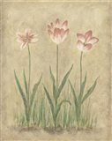 Blooming Tulips I Art Print