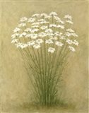 Floral C Art Print