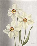 Spring Narcissus Art Print